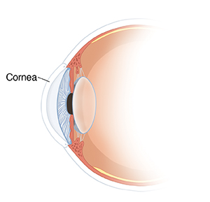 Cross section of eye showing cornea, pupil, iris, and lens.