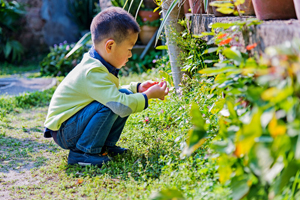 Boy looks at flowers in a garden.