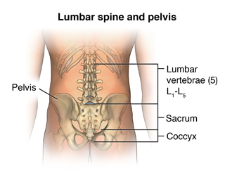 Lumbar spine and pelvis